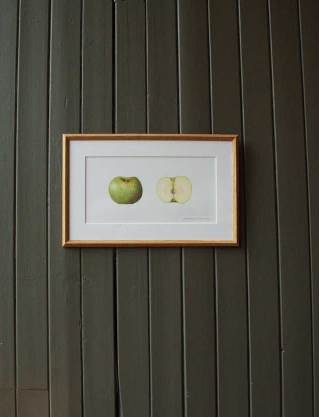 apple-picture