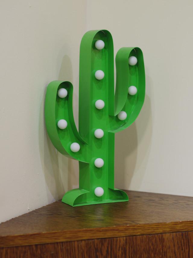 Cactus decoration at Taco Mazama, Edinburgh
